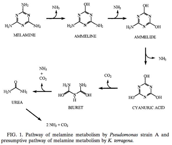 Figure1_Metabolism_of_Melamine_by_Klebsiella_terragena.png