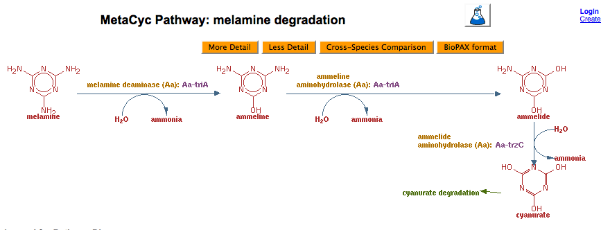 Figure_MetaCyc_Pathway_melamine_degradation.png